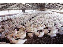 鸡舍环境监测控系统-鸡舍温湿度监控系统价格