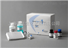 96T/48T人白三烯B4(LTB4) 检测ELISA试剂盒
